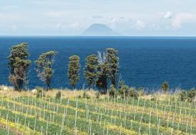 Weinverkostung Sizilien -