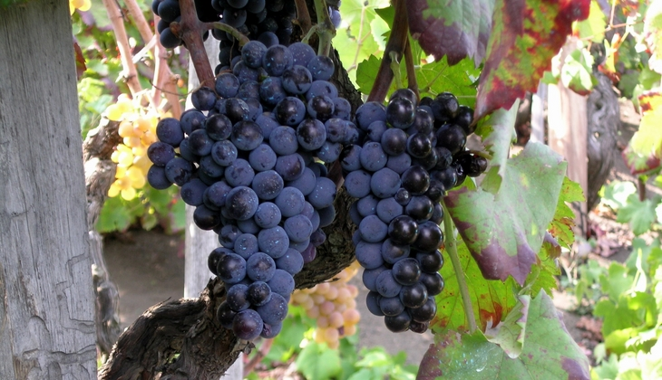 bester sizilianischer Wein Weinverkostung Sizilien Weinherstellung Sizilien Ätna
