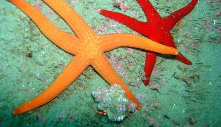 Unterwasserwelt Siziliens - Diving Sizilien