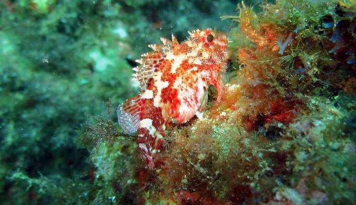 Schnorcheln Sizilien - Das Meer Siziliens