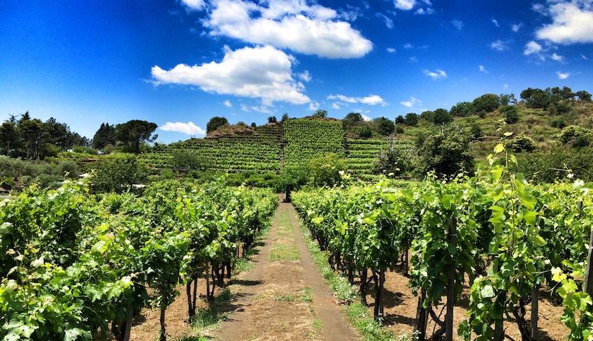 bester sizilianischer Wein Rundgang im Weinkeller Weinkeller Verkostung Sizilien Ätna