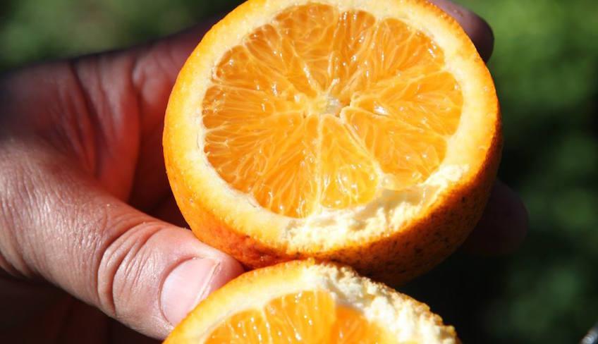 Orangen Siziliens Sizilianische Weinkeller zum Besuchen Sizilien Wein Führung