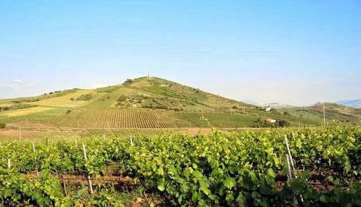 sizilianische Weine - Besuch sizilianischer Weinkeller