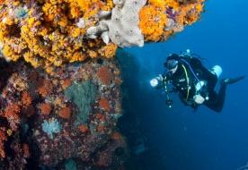 die besten Tauchgänge Siziliens Unterwasser-Tauchgänge Tauchgänge an Land