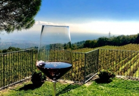 Weinverkostung sizilianischer Mandelwein Sizilien erleben Ätna