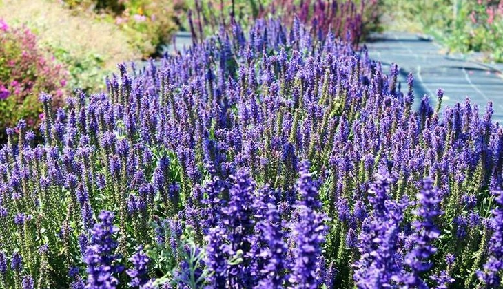Parcours der Sinne Verkostung Sizilien Parcours der Geruchssinne Ragusa