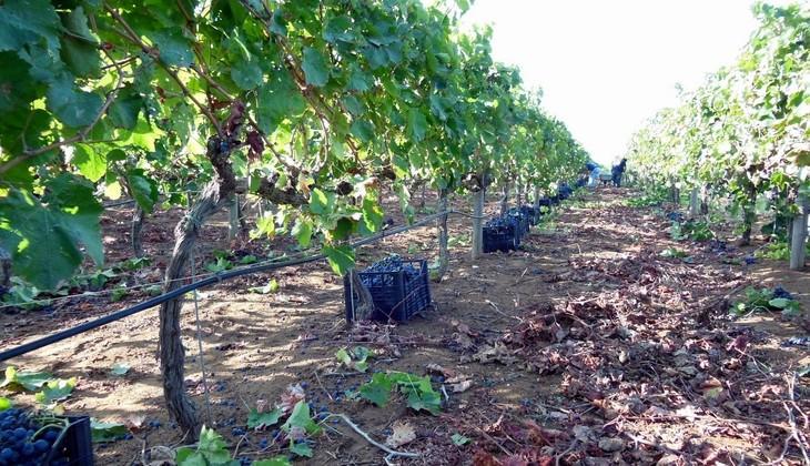 Wein Sizilien - berühmter Wein Siziliens
