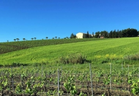 cantine di vino - degustatore di vini