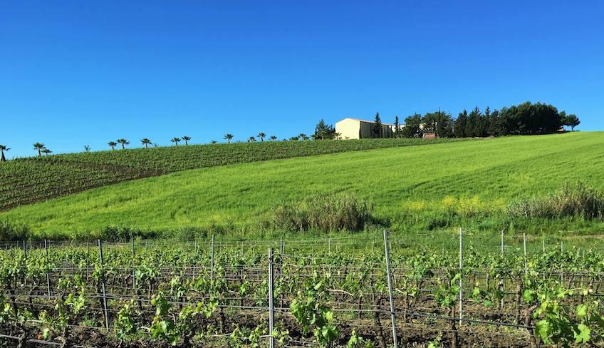 Weinverkostung Palermo
