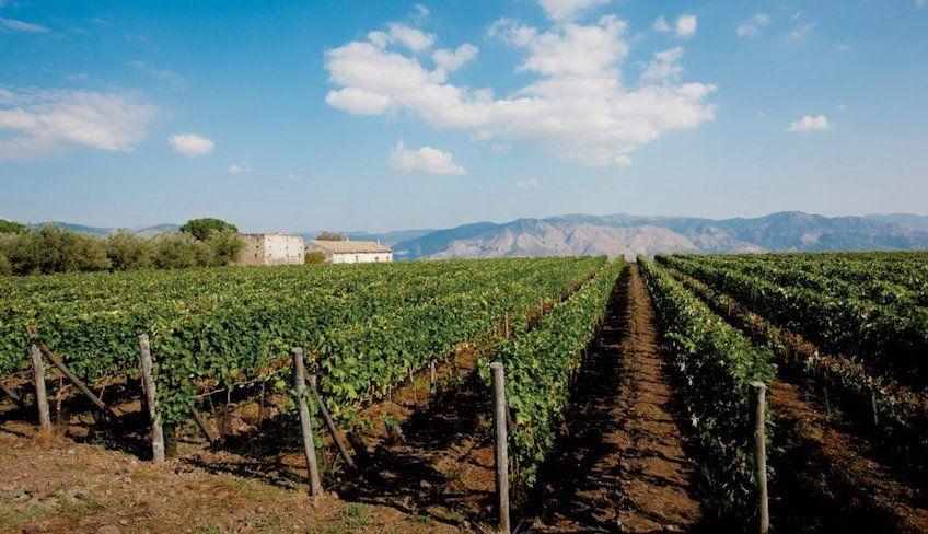 Weinverkostung Keller -
