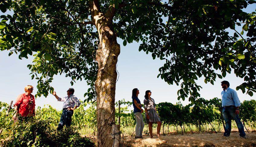 Weinverkostung Ätna - Ätna Weintour