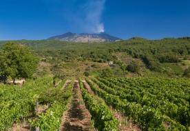 degustazione vini etna - aziende vinicole etna
