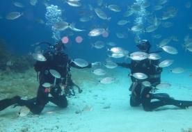 Diving Holiday in Sicilien - Scuba Diving in Italien