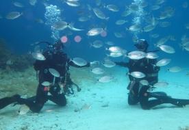 Diving - Tauchgang Single