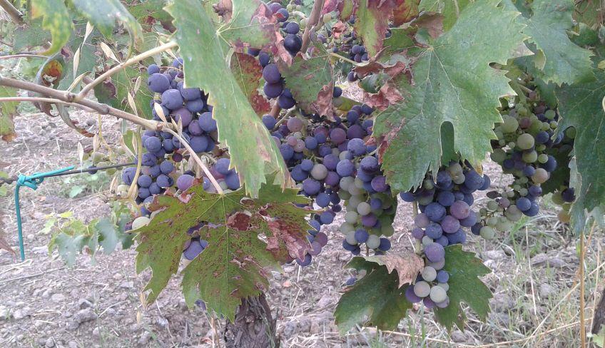 Ätna Wein Verkostung - Ätna Wein