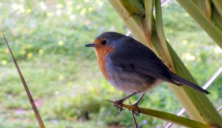 Wanderung der Vögel Beobachtung der Vogelwelt geführte Routen durch Sizilien