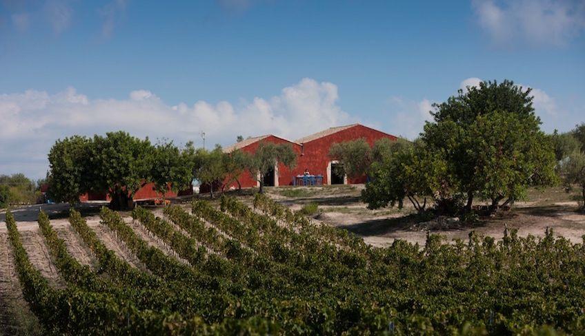 Weinverkostung in Sizilien -