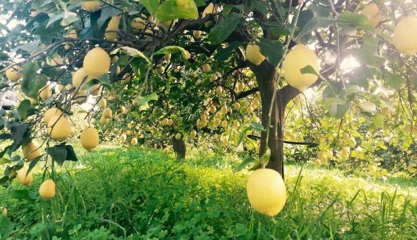 Bestes sizilianisches Olivenöl -