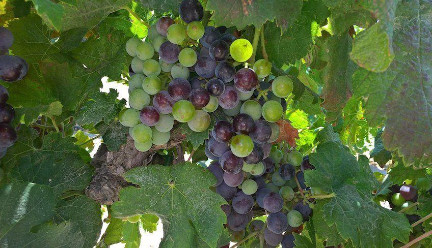 Weinverkostung Noto -